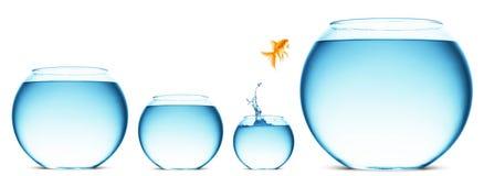 Перескакивать goldfish иллюстрация штока