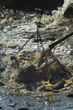 перетаскивание fishs Стоковое фото RF