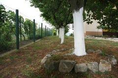 переулок валов вишни стоковое изображение rf