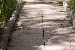 Переулок в зеленой природе Стоковые Фотографии RF