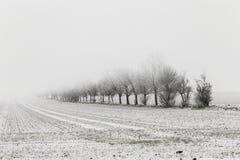 Переулок в ландшафте зимы покрытом с снегом Стоковое фото RF