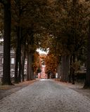 Переулок в осени forrest стоковые изображения