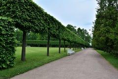 Переулок в парке Катрина Tsarskoye Selo Pushkin Взгляд собора Андрюа апостола Стоковая Фотография RF