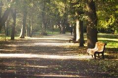 Переулок в парке осени Стоковое Фото