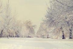 Переулок дерева зимы стоковое фото rf