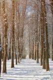Переулок дерева зимы Стоковые Изображения RF