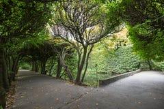 Переулок дерева на парке Oliwa Стоковое Фото