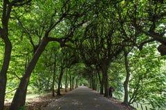 Переулок дерева на парке Oliwa Стоковое Изображение