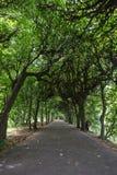 Переулок дерева на парке Oliwa Стоковое Изображение RF