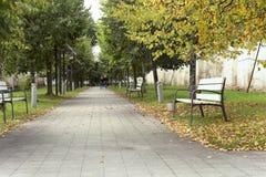 Переулок дерева с стендами в предыдущей осени Стоковое фото RF
