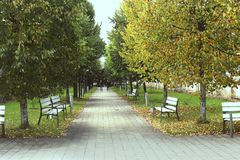 Переулок дерева с стендами в предыдущей осени Стоковые Фото