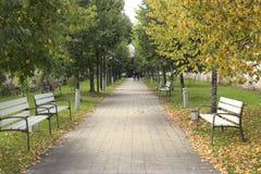 Переулок дерева с стендами в предыдущей осени Стоковое Изображение RF