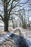 Переулок дерева Snowy сельский в зиме стоковые изображения rf