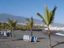 Переулок ладони на пляже океан Стоковое Изображение RF