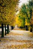Переулок парка Schoenbrunn пустой при деревья осени преобразовывая в Стоковые Фотографии RF