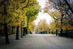 Переулок парка Schoenbrunn с золотыми желтыми деревьями Стоковая Фотография RF