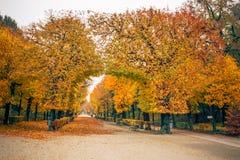 Переулок парка Schoenbrunn с сдобренными деревьями с яркая яркой выкрикивает Стоковая Фотография