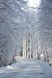 переулок снежный стоковое фото rf