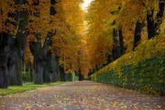 Переулок с деревьями в парке города осени стоковые фотографии rf