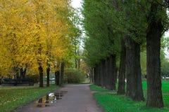 Переулок с деревьями в парке города осени стоковая фотография