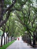 переулок Стоковые Изображения RF