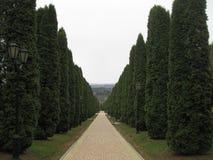 Переулок Cypress Переулок Cypress идет далеко Стоковые Фото