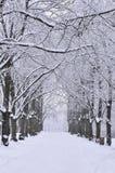 Переулок Snowy стоковая фотография
