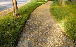 Переулок акации на часе захода солнца золотом Стоковые Фотографии RF