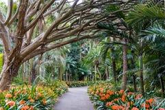 Переулок ботанических садов Стоковые Изображения