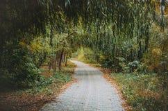 Переулок вербы в парке в осени Стоковые Изображения RF