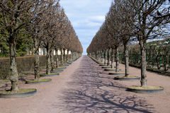 Переулок весны в парке без листьев Стоковая Фотография RF