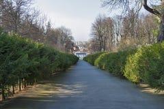 Переулок весны елевый Стоковое фото RF