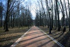 Переулок в парке в предыдущей весне Стоковые Фотографии RF