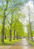 Переулок в парке в Lappeenranta Стоковая Фотография RF