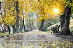 Переулок в парке Стоковые Изображения
