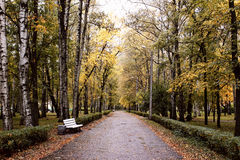Переулок в парке Стоковая Фотография RF