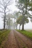 Переулок в тумане утра Стоковая Фотография