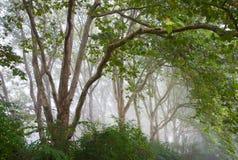 Переулок в тумане Стоковая Фотография