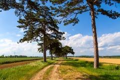 Переулок дерева в лете с тропой Стоковая Фотография