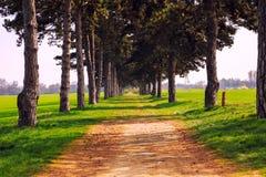 Переулок дерева в лете с тропой Стоковые Изображения