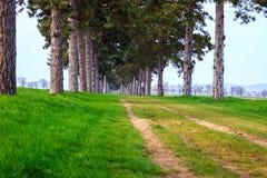 Переулок дерева в лете с тропой Стоковое Изображение RF