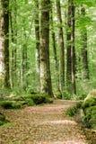 Переулок дерева в лете Стоковые Изображения RF