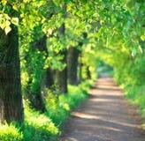 Переулок дерева в лете Стоковые Изображения
