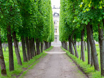 Переулок дерева в парке в лете Стоковая Фотография