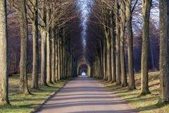 Переулок дерева в парке Стоковые Изображения