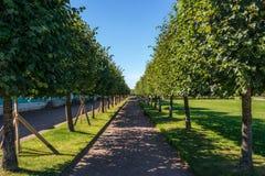 Переулок дерева в Peterhof Стоковое Фото
