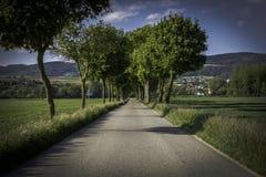 Переулок дерева сельской местности в Австрии Стоковые Изображения RF