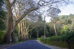 Переулок дерева Стоковое Изображение RF