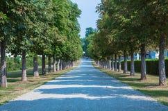 Переулок дерева Стоковые Изображения RF
