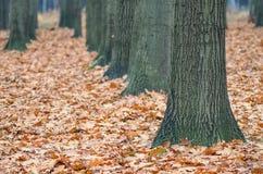 Переулок дерева Стоковая Фотография